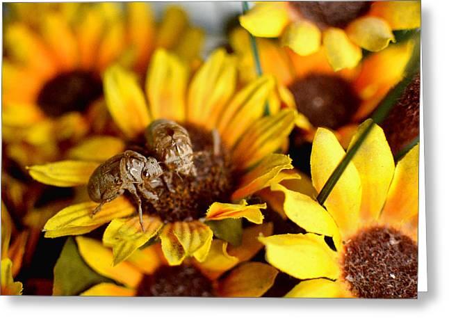 Shell Of A Bug On Flower Greeting Card by Jeffrey Platt