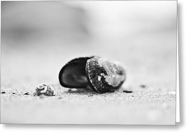 Shell On The Beach Greeting Card by Andrew Raby