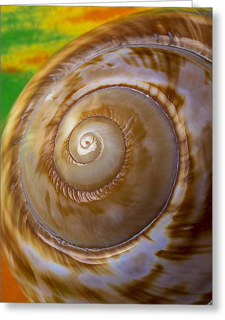 Shell Spiral Greeting Card