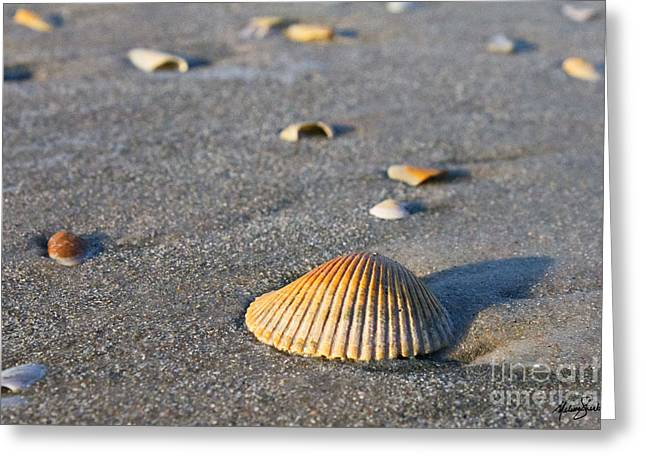 Greeting Card featuring the photograph Shells 01 by Melissa Sherbon