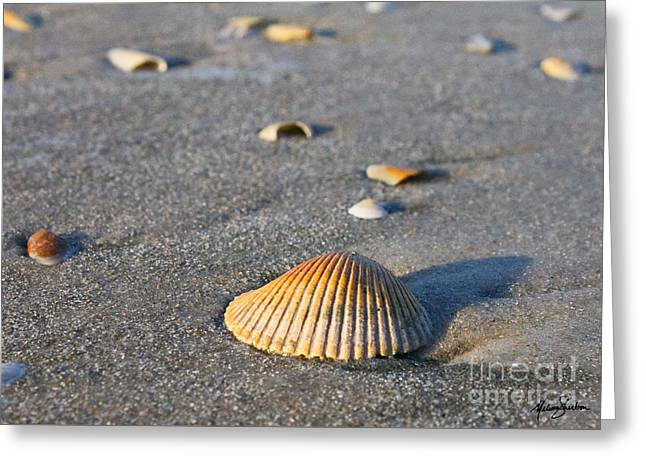Shells 01 Greeting Card