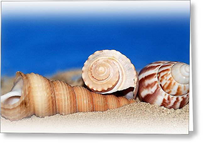 Shells In Sand Greeting Card by Francie Davis