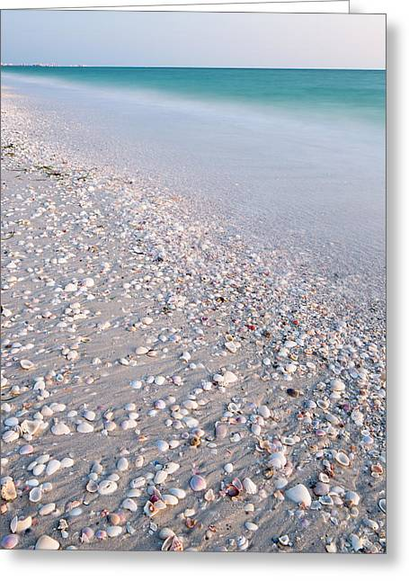 Shells In The Sand Greeting Card by Adam Pender