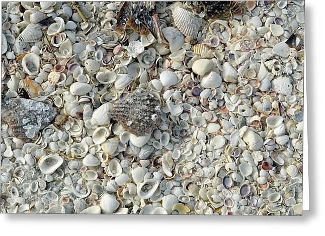 Shells On A Beach Greeting Card