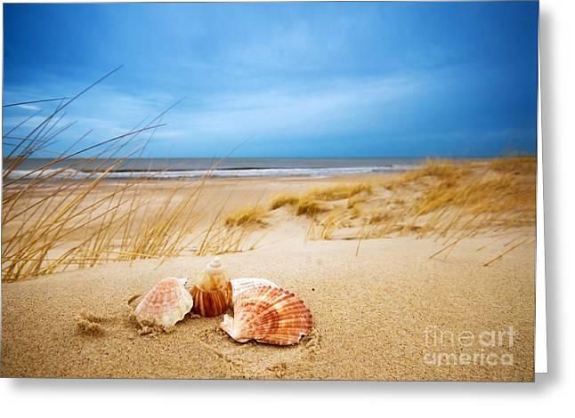 Shells On Sand Greeting Card by Michal Bednarek