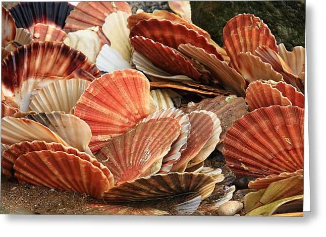 Shells On The Shore Greeting Card by Aidan Moran