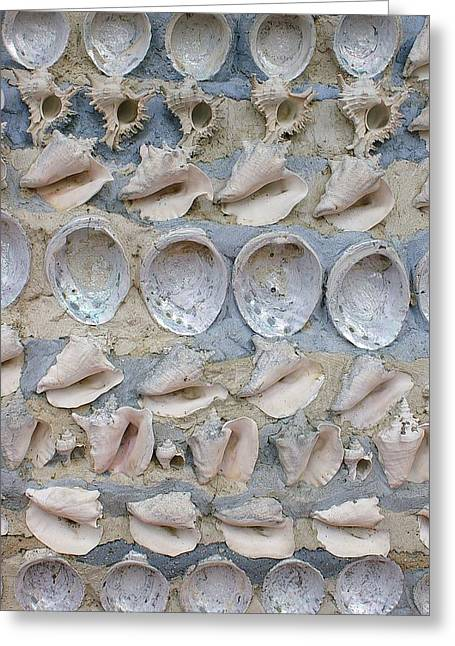 Greeting Card featuring the photograph Shells by Randy Pollard