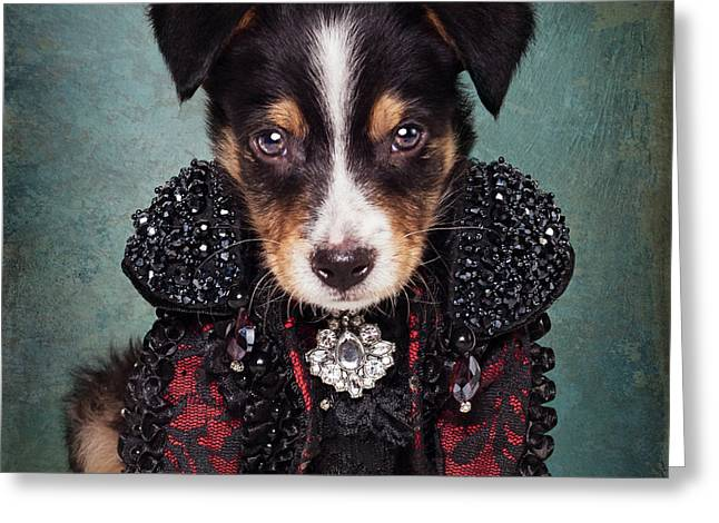 Shelter Pets Project - Loki Greeting Card by Tammy Swarek