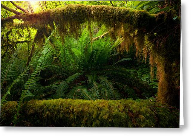 Sheltered Fern Greeting Card