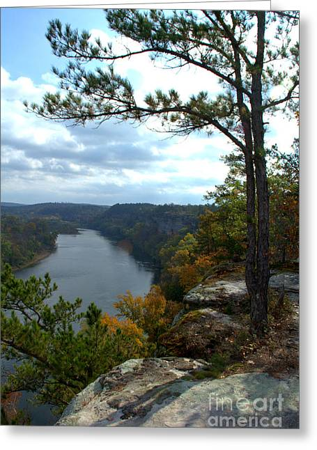 Greeting Card featuring the photograph Sheltering Pine by Jim McCain