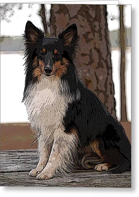Sheltie Art01 Greeting Card