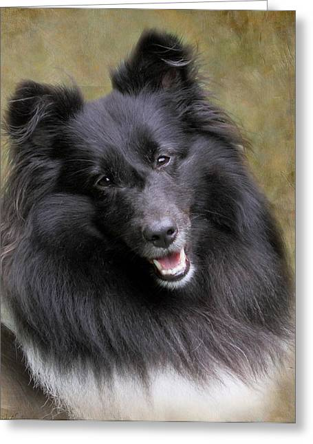 Sheltie Princess Greeting Card by Angie Vogel