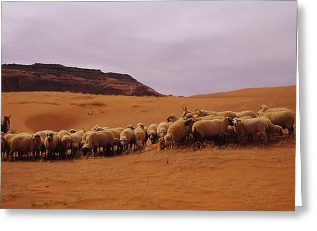 Shepherd Herding A Flock Of Sheep Greeting Card