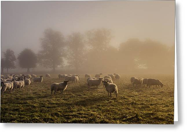 Shepherding Greeting Card by Chris Fletcher