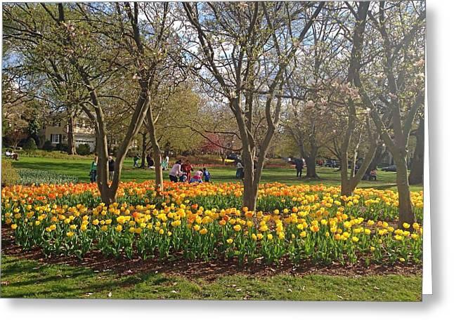 Sherwood Gardens Yellow Tulips Greeting Card