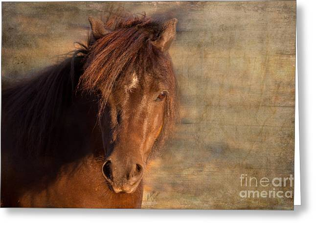 Shetland Pony At Sunset Greeting Card by Michelle Wrighton