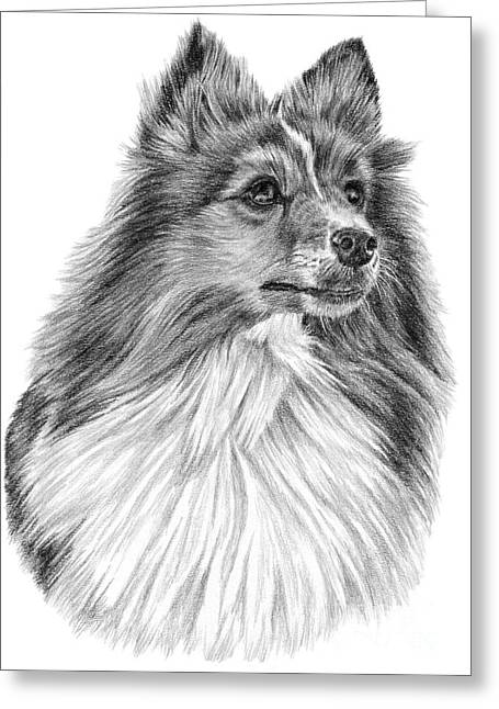 Shetland Sheepdog Greeting Card