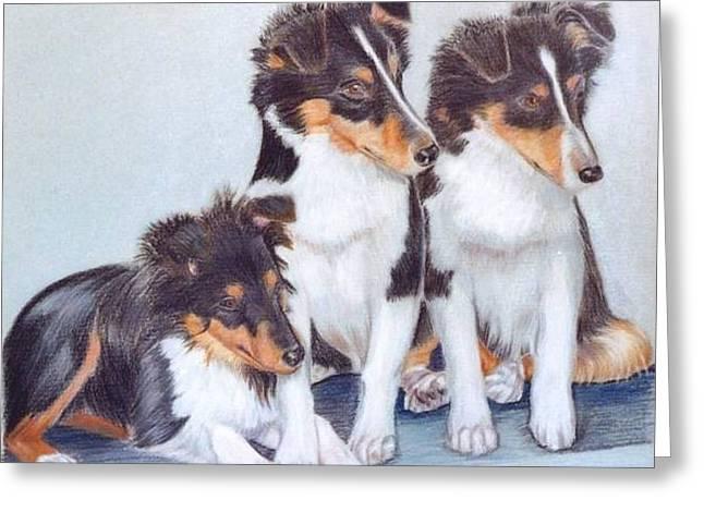 Shetland Sheepdog Puppies Greeting Card