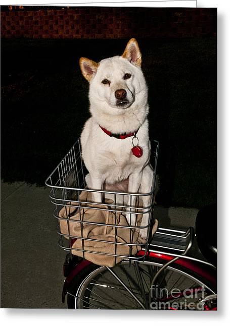 Shiba Inu Dog Greeting Card by William H. Mullins