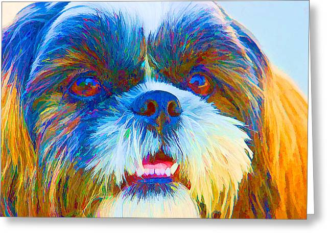 Shih Tzu   Greeting Card by RM Vera