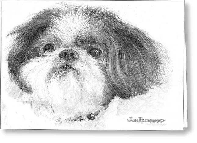 Shih-tzu Greeting Card by Jim Hubbard
