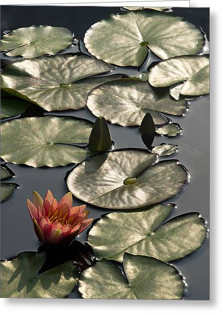 Shimmering Lily Pads Greeting Card