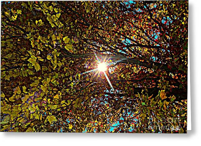 Greeting Card featuring the photograph Shine On Me by Geri Glavis