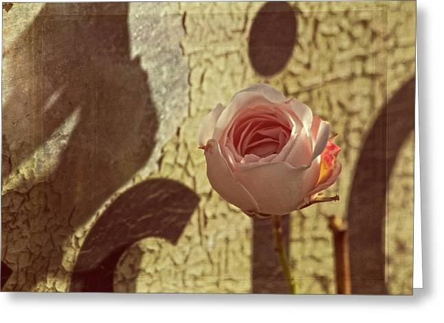 Shine Softly Greeting Card