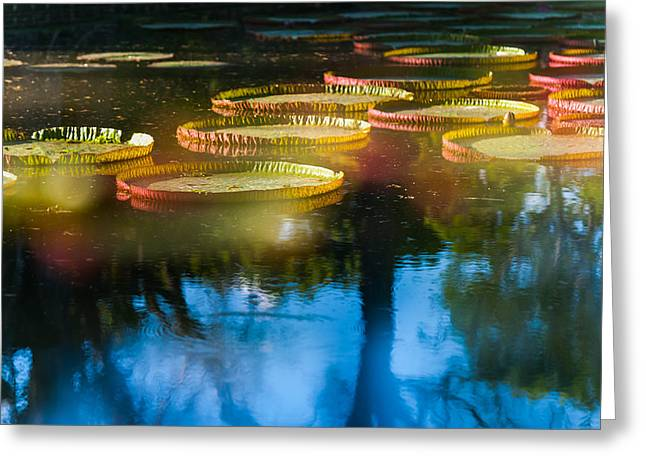 Shining Leaves Of Victoria Regia. Royal Botanical Garden In Mauritius. Impressionistic Greeting Card