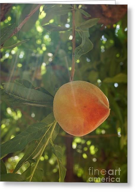 Shining Peach Greeting Card by Kerri Mortenson