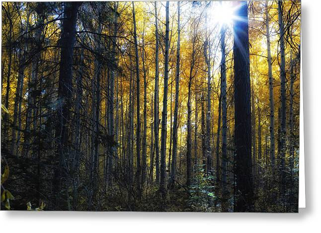 Greeting Card featuring the photograph Shining Through by Belinda Greb