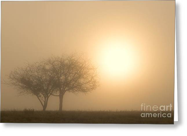 Shining Through Greeting Card by Mike  Dawson