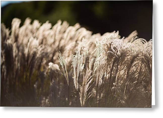Shining Weeds Greeting Card by Mike Lee