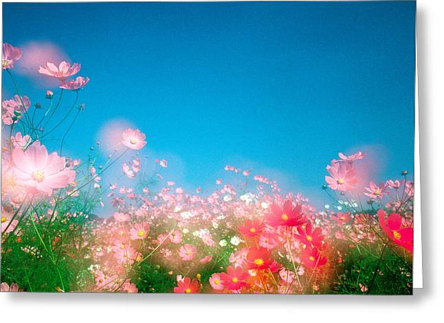 Shiny Pink Flowers In Bloom With Blue Greeting Card