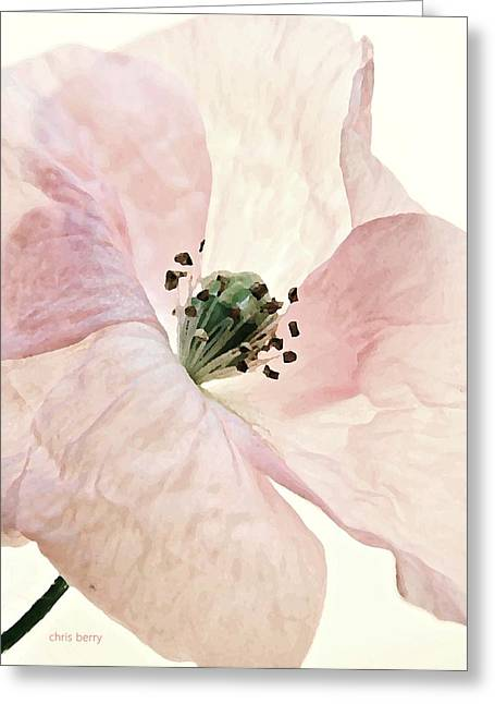 Shirley Watercolor Greeting Card by Chris Berry