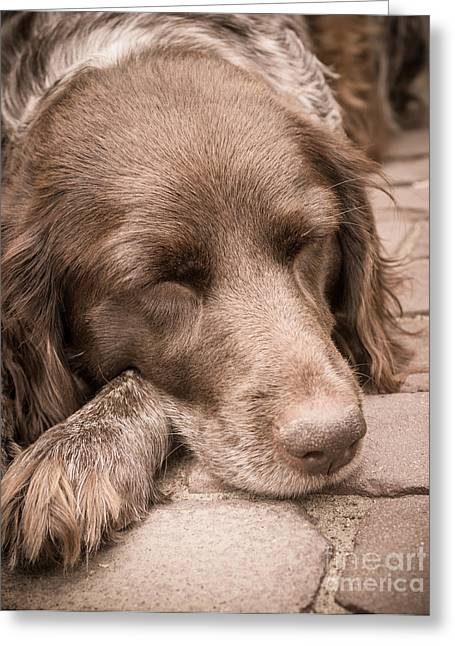 Greeting Card featuring the photograph Shishka Dog Dreaming The Day Away by Peta Thames