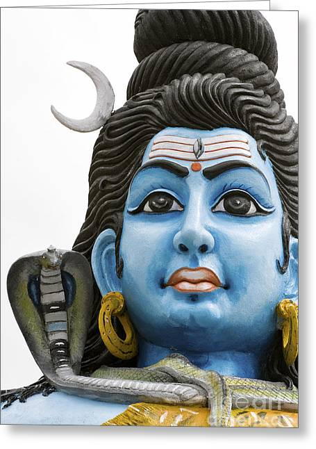 Shiva Greeting Card by Tim Gainey