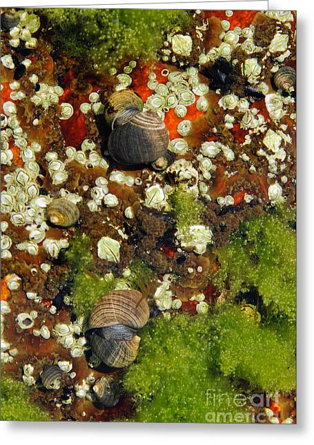 Shoals Tide Pool Greeting Card