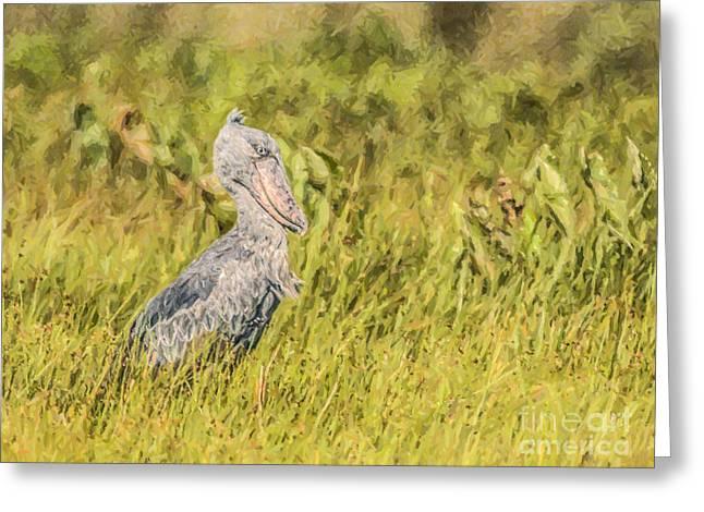 Shoebill Balaeniceps Rex Uganda Africa Greeting Card by Liz Leyden