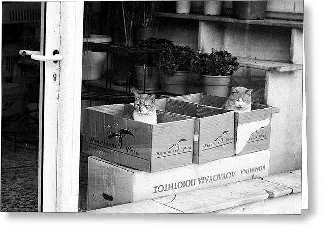 Greeting Card featuring the photograph Shop Window Cats by Laura Melis