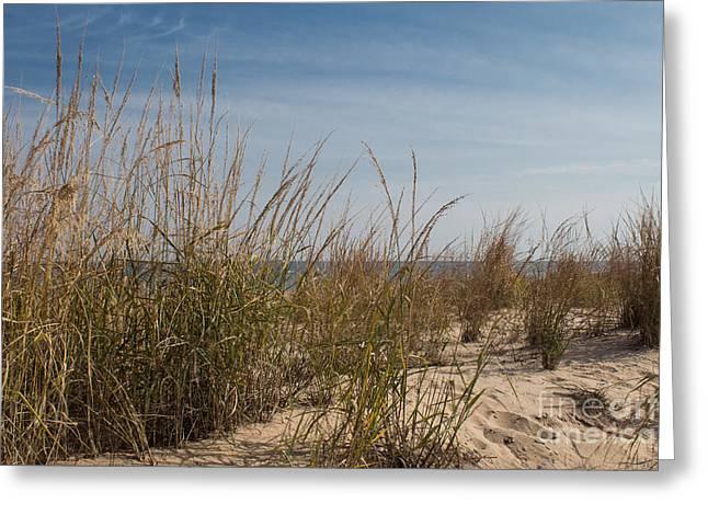 Shore Greeting Card by Arlene Carmel