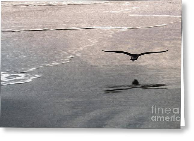 Shore Bird Greeting Card by Gregory Dyer