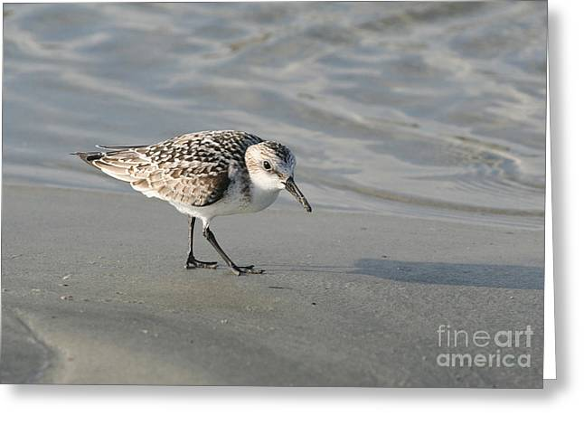 Shore Bird On Ocean Beach Greeting Card