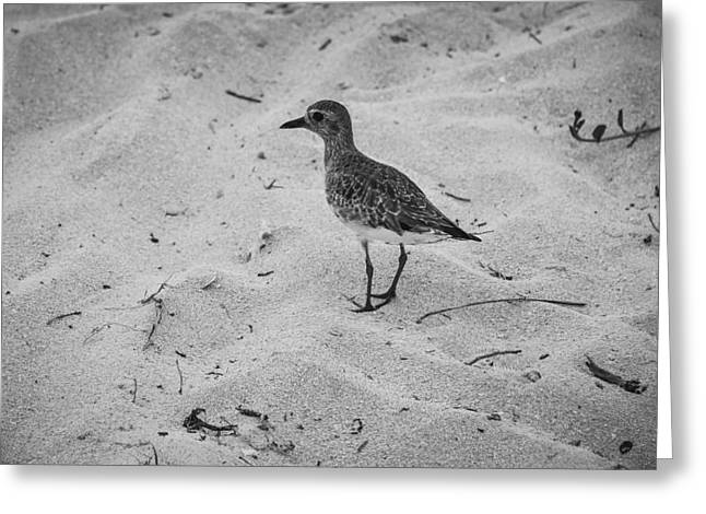 Greeting Card featuring the photograph Shore Bird by Phil Abrams