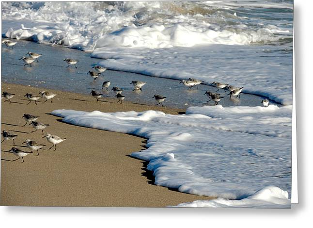 Shore Birds South Florida Greeting Card by Marilyn Holkham