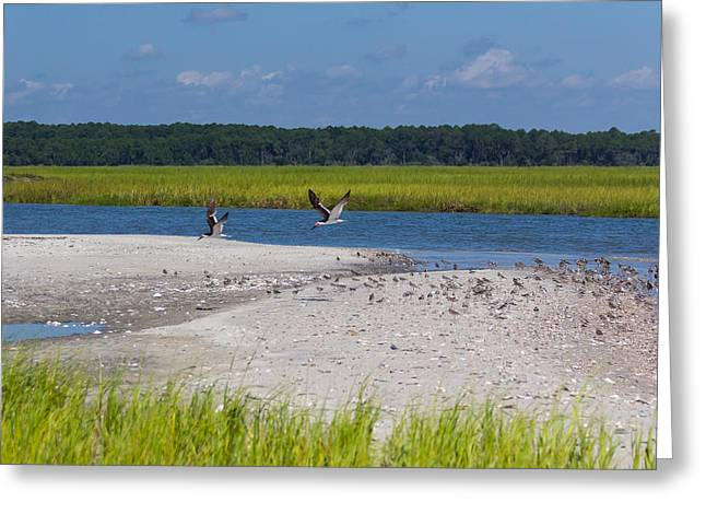 Shorebirds And Marsh Grass Greeting Card by Patricia Schaefer