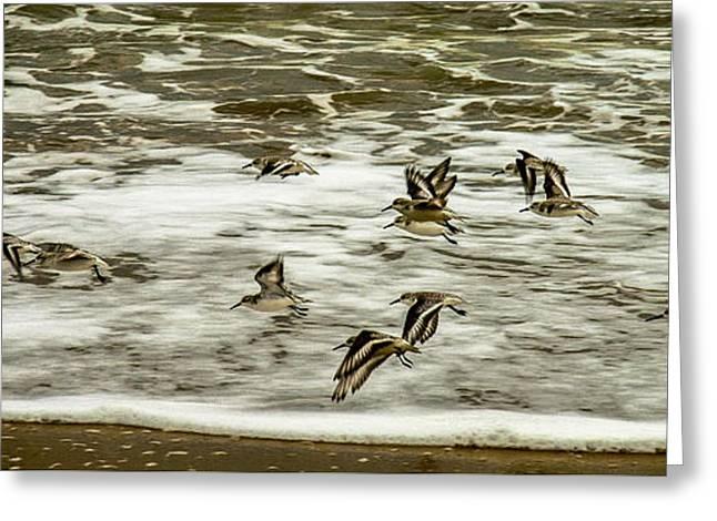 Shorebirds At Duck Greeting Card