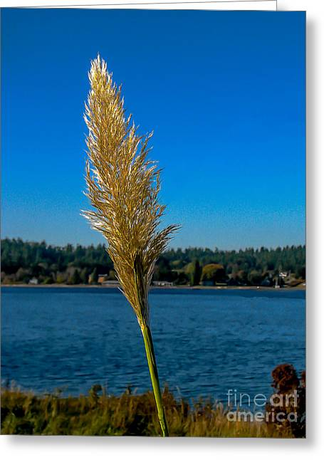 Shoreline Grass Greeting Card