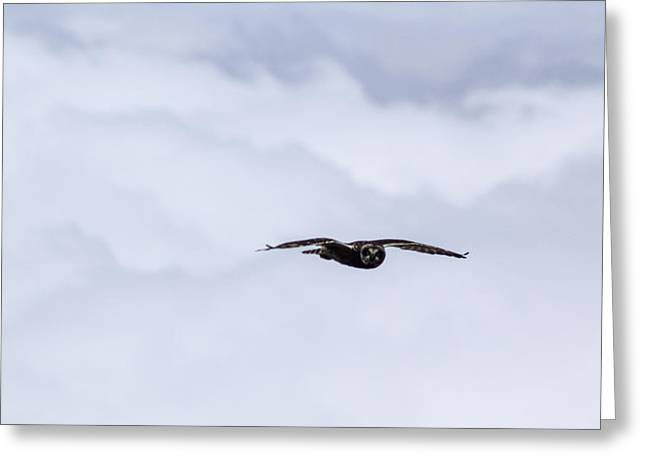 Short Eared Owl Above The Clouds Greeting Card by Brad Scott