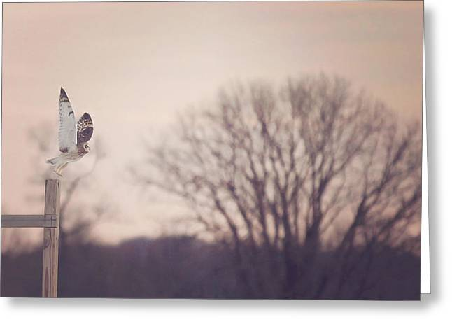 Short Eared Owl At Dusk Greeting Card